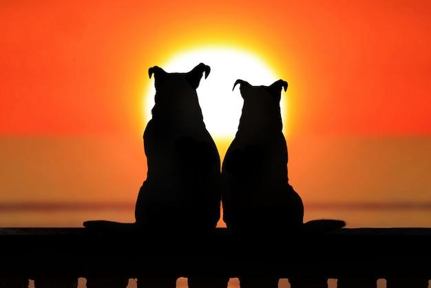 Couple de jack russell au coucher du soleil Photo Premium