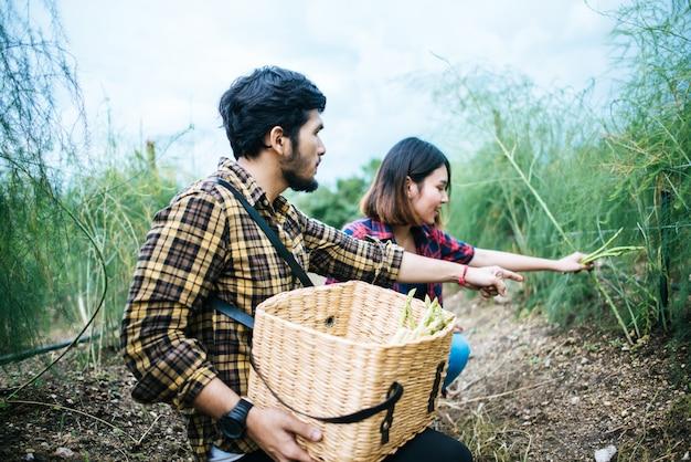 Couple de jeunes agriculteurs récoltent des asperges fraîches avec la main ensemble mis dans le panier. Photo gratuit