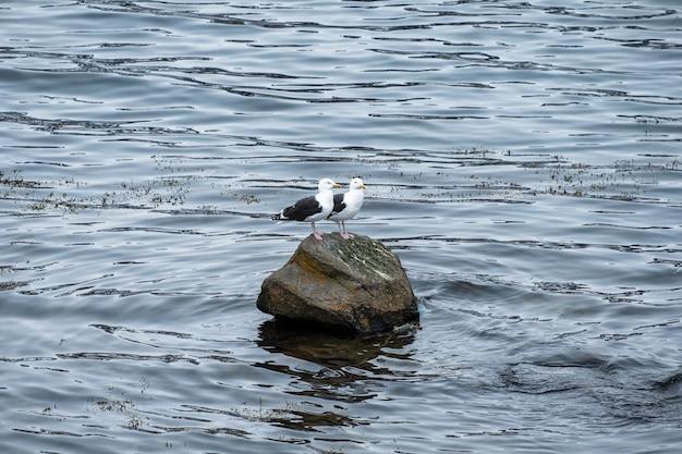 Couple, mouette, oiseaux, debout, sur, rocher Photo Premium