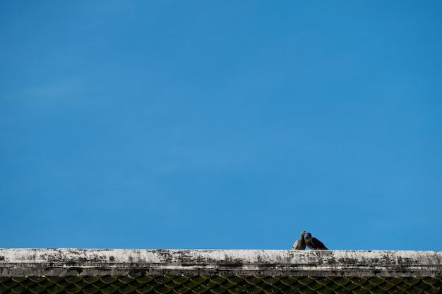 Couple, oiseau, toit, ciel bleu Photo Premium