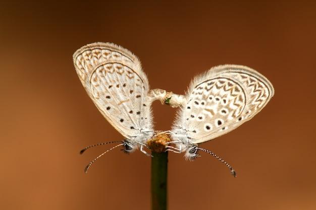Couple De Papillon Photo Premium