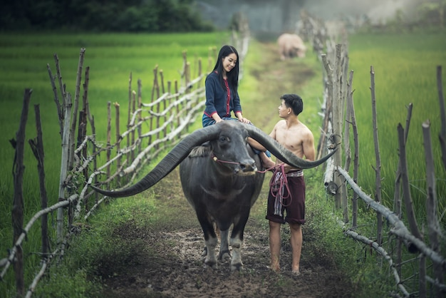 Couple paysan en costume paysan avec buffle sur rizières Photo Premium