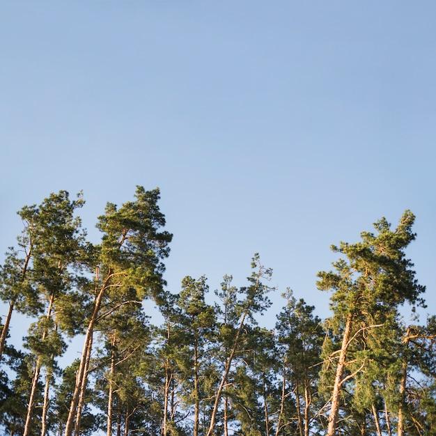 Couronnes d'arbres forestiers Photo gratuit