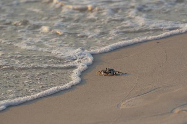 Crabe marchant le long de la plage avec des bulles de vagues de la mer Photo Premium