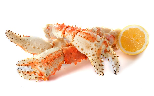 Crabe royal Photo Premium