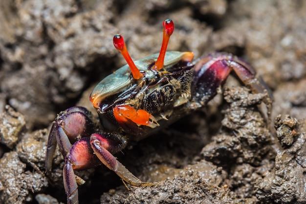 Crabes colorés Photo Premium