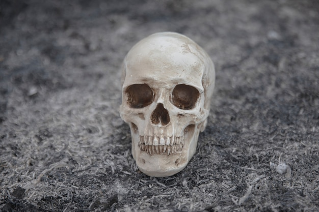 Crâne en ciment créé pour les séances de photo Photo gratuit