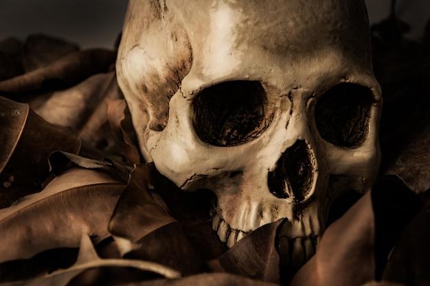 Crâne avec feuille sèche, nature morte Photo Premium