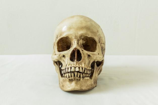 Crâne humain sur fond blanc Photo Premium