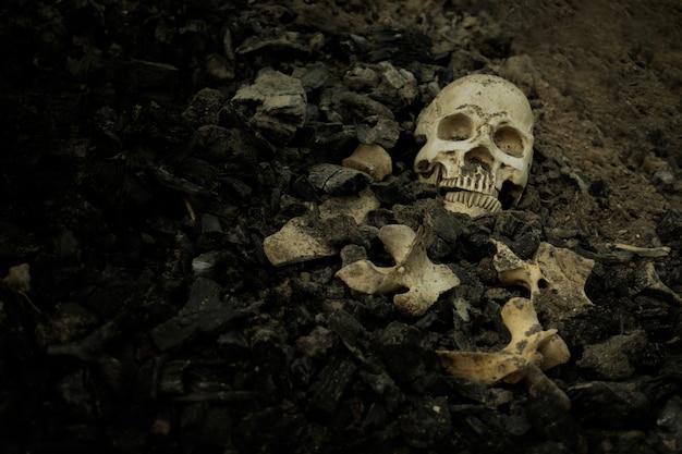 Crâne et os extraits d'une fosse dans le cimetière effrayant qui a une lumière tamisée Photo Premium