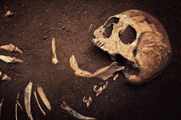 Crâne et os Photo Premium