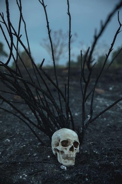 Crâne Réaliste Avec Branches Regardant à La Loupe Photo gratuit