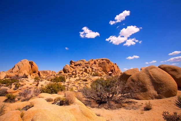 Crâne, rocher, joshua tree, parc national, mohave, californie Photo Premium
