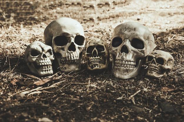 Crânes sombres placés sur le sol Photo gratuit