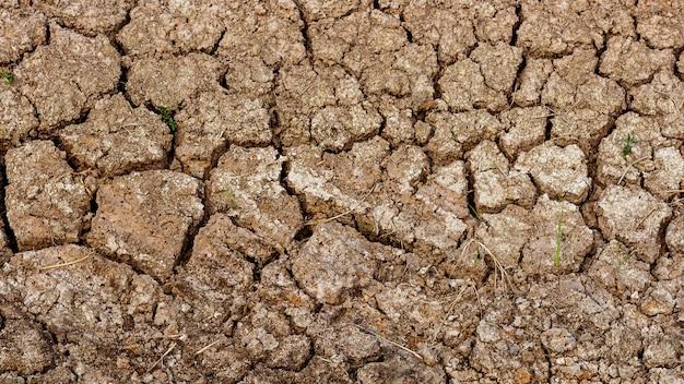 Craquer la texture du sol en été. du climat mondial Photo Premium