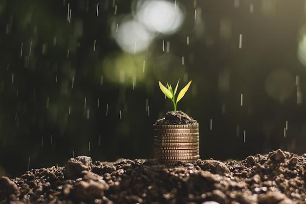 Croissance financière, pièces de monnaie et semis. Photo Premium