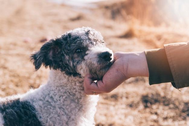 Crop person caressing dog Photo gratuit