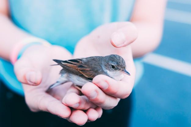 Crop personne tenant un oiseau Photo gratuit