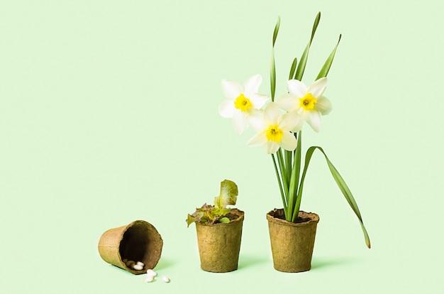 Cultiver Des Fleurs, Des Légumes, Des Herbes, Des Légumes Verts, Des Graines Dans Des Pots De Tourbe. Jardinage De Printemps. Plantes Variétales. Photo Premium