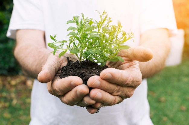 Culture Jardinier Avec Des Semis Frais Dans Les Mains Photo gratuit