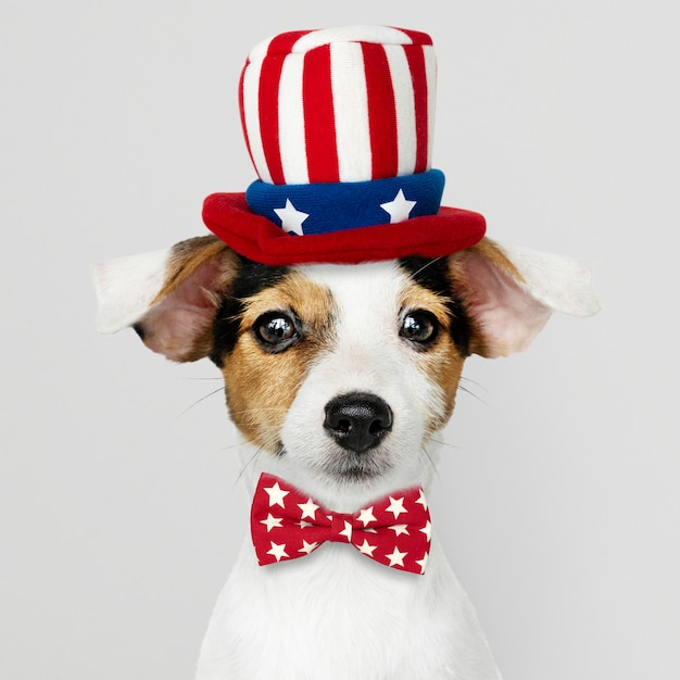 Cute Jack Russell Terrier Avec Chapeau Et Noeud Papillon Oncle Sam Photo gratuit