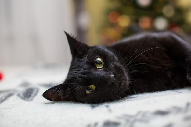 Cutie Cat Se Détendre Sur Le Canapé à La Maison Photo gratuit
