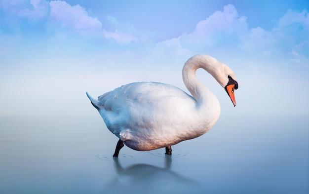 Cygne Blanc Dans Le Lac Au Brouillard Du Matin. Fond Romantique Bleu Avec Des Nuages. Photo Premium