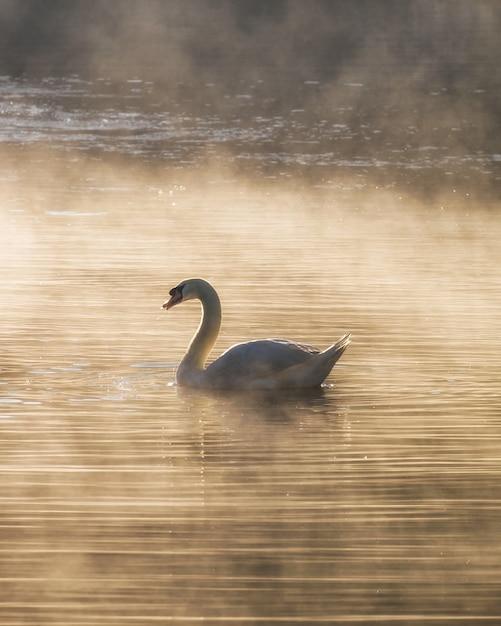 Cygne blanc sur le réservoir de brouillard Photo Premium