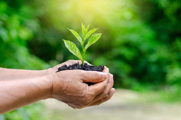 Dans les mains des arbres qui poussent des plants. bokeh vert fond femme tenant un arbre Photo Premium