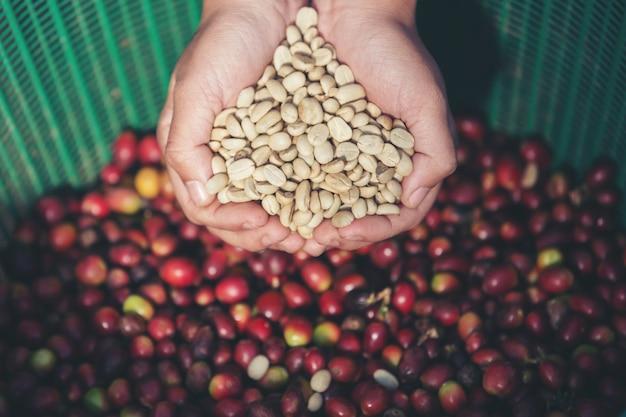 Dans les mains qui portent des grains de café Photo gratuit