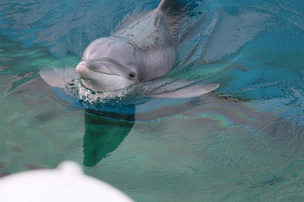 Dauphin à l'aquarium Photo Premium