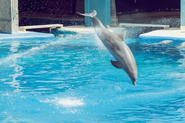 Dauphin, sauter, dans, a, exposition, éclaboussure eau Photo Premium