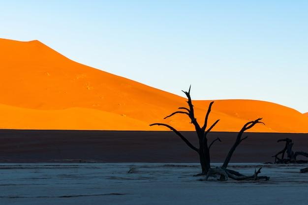 Deadvlei Dans Le Parc National De Namib-naukluft Sossusvlei En Namibie - Camelthorn Morts Contre Les Dunes De Sable Orange Avec Un Ciel Bleu. Photo gratuit