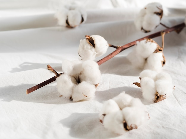Décoration Avec Fleurs De Coton Sur Drap Blanc Photo gratuit