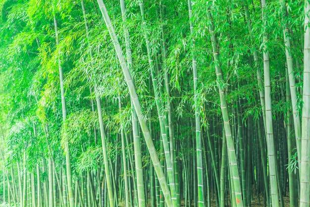 Décoration de jardin chine japonaise forêt   Télécharger des Photos ...