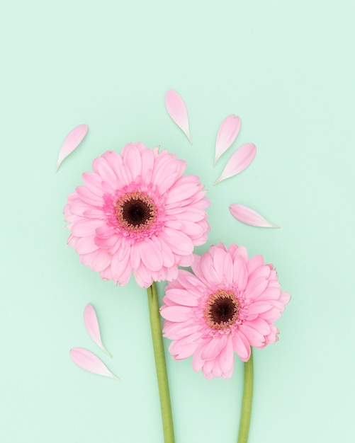 Décoration Vue De Dessus Avec Des Fleurs Roses Photo gratuit