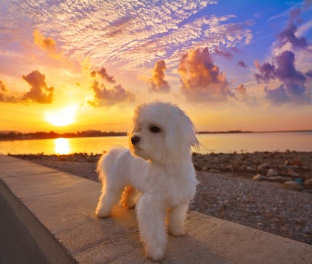 Denia coucher de soleil depuis la plage de las rotas à alicante Photo Premium