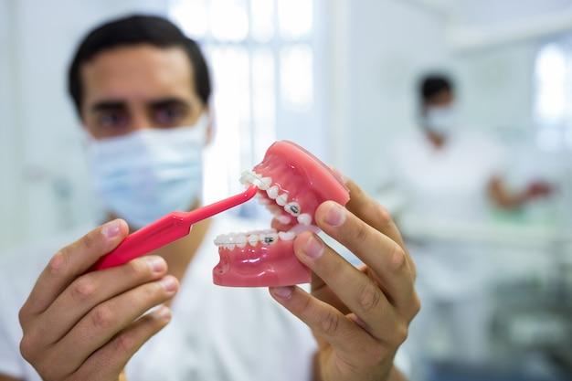Dentiste, Nettoyage Du Modèle De Mâchoire Dentaire Avec Une Brosse à Dents Photo gratuit