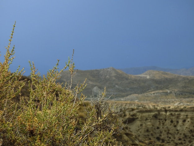 Desierto de tabernas, almeria, españa Photo Premium