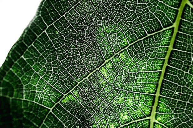 Détail d'une feuille verte Photo gratuit