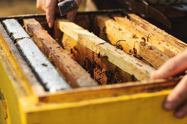 Détail de la ruche d'abeille. apiculteur travaille avec les abeilles et les ruches sur le rucher Photo Premium