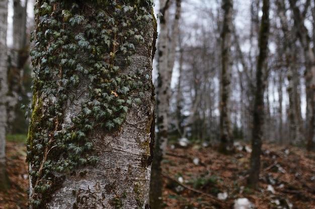 Détails De La Forêt Capturés à La Lumière Du Jour Photo gratuit