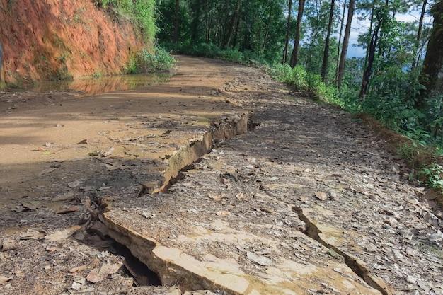Détails de la séparation de la route de gravier dans une zone rurale de la forêt. Photo Premium