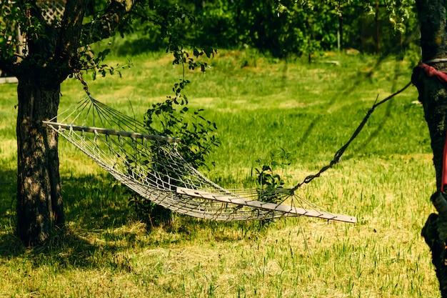 Détente avec hamac dans la forêt verte Photo Premium