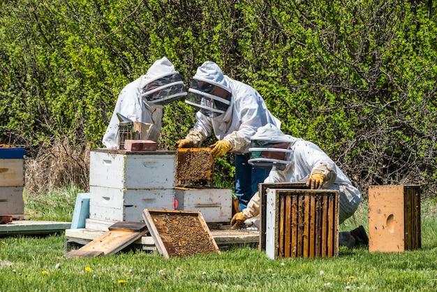 Deux apiculteurs méconnaissables inspectant des plateaux à couvain de ruche super Photo Premium