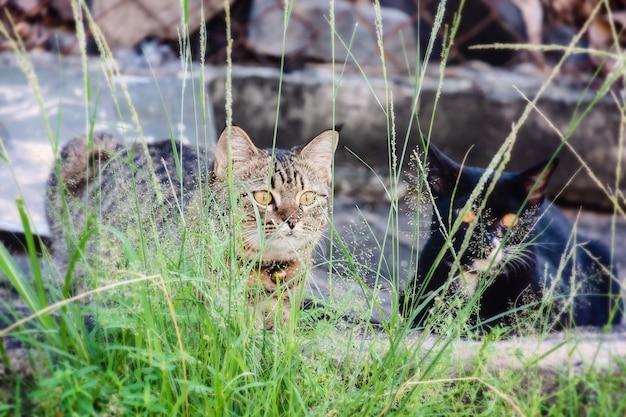 Deux chats assis dans l'herbe Photo Premium