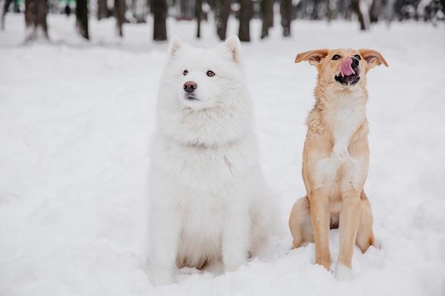 Deux chiens drôles assis sur la neige dans la forêt Photo Premium