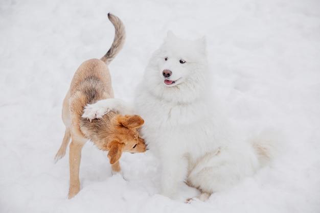 Deux chiens drôles jouant sur la neige dans une forêt. chiens ludiques Photo Premium