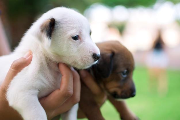 Deux chiots, un blanc et un brun Photo Premium