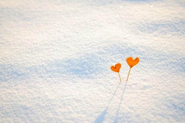 Deux coeurs de mandarine orange vintage sur des bâtons sur la neige blanche Photo Premium